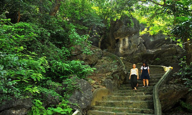 Tuyệt tình cốc Ninh Bình - cây cổ thụ