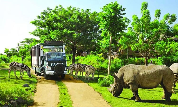 Vinpearl Phú Quốc có gì - vườn thú
