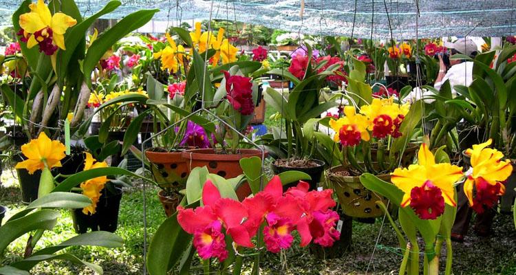Vườn hoa Đà Lạt 5