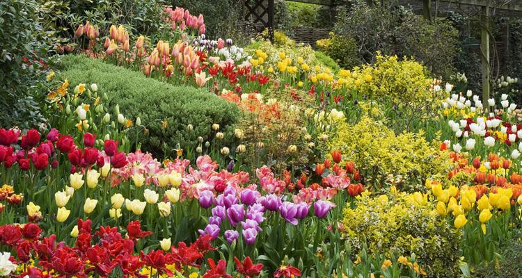 Vườn hoa Đà Lạt 4