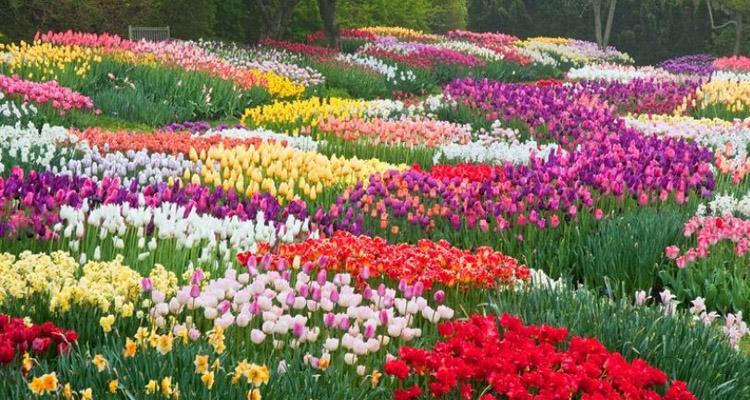 Vườn hoa Đà Lạt 2