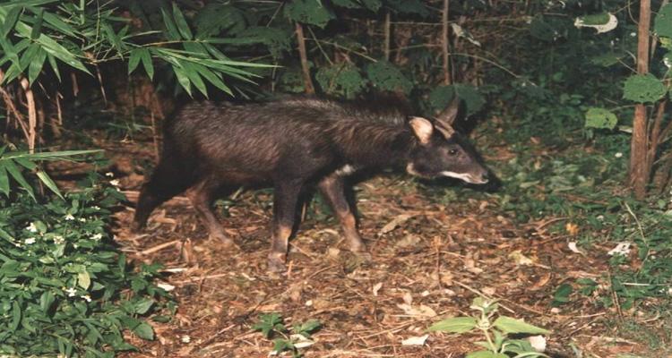 Vườn quốc gia Cát Tiên - động vật
