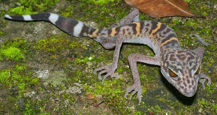 Vườn quốc gia Cát Tiên - bò sát