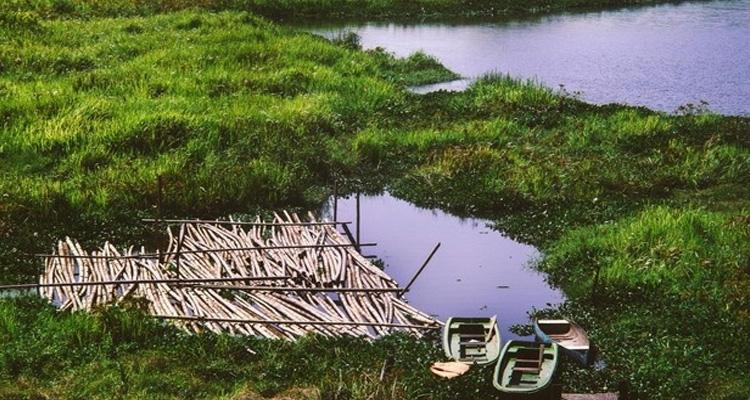 Vườn quốc gia Cát Tiên - các sấu
