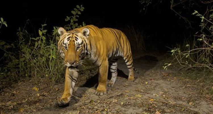 Vườn quốc gia Cát Tiên - săn mồi