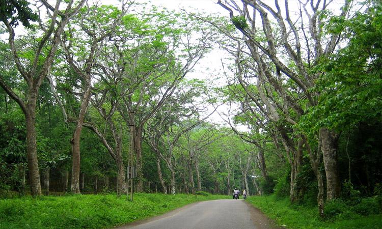 Vườn quốc gia Cúc Phương Ninh Bình - giá vé