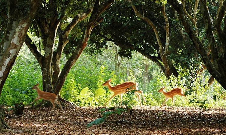 Vườn quốc gia Cúc Phương Ninh Bình - linh trưởng