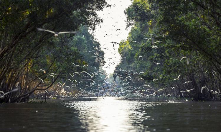 Vườn quốc gia Tràm Chim - sếu