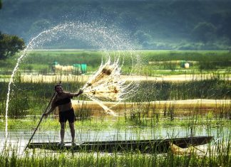 Vườn quốc gia Tràm Chim - có gì