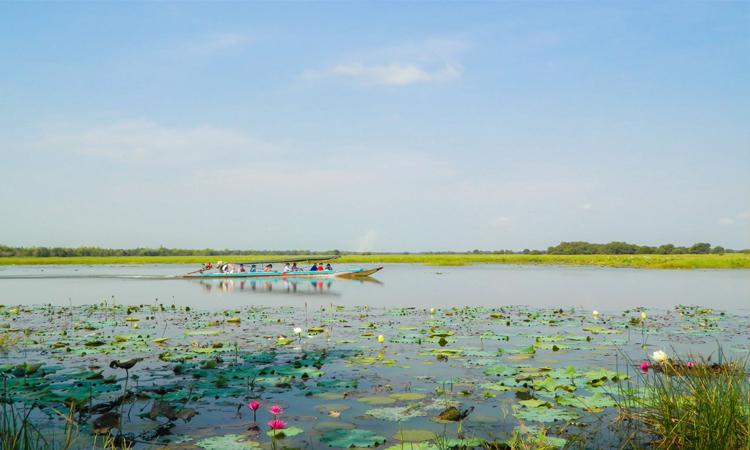 Vườn quốc gia Tràm Chim - sen