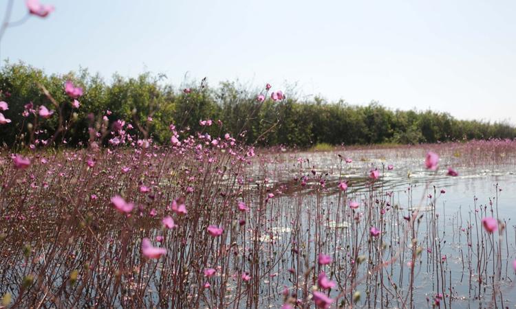 Vườn quốc gia Tràm Chim - tham quan