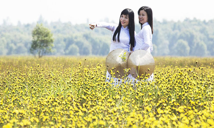 Vườn quốc gia Tràm Chim - hoa vàng