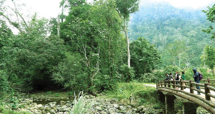 Vườn quốc gia Xuân Sơn rừng cây