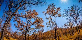 Khám phá vườn Quốc gia Yok Đôn