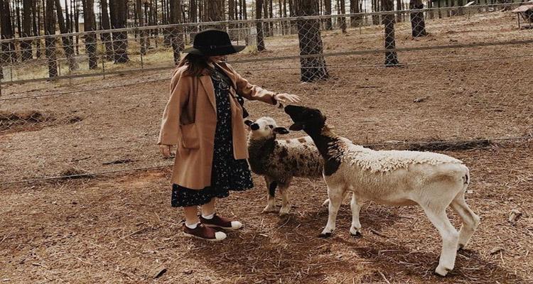 zoodoo đà lạt - cừu