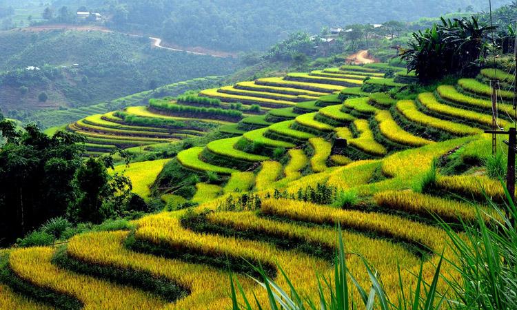 Kinh nghiệm du lịch Tuyên Quang từ a - z - ruộng bậc thang