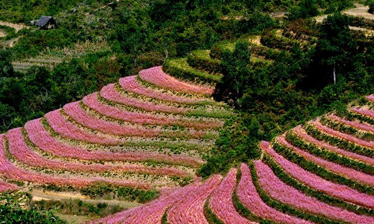 Kinh nghiệm du lịch Tuyên Quang từ a - z - hoa