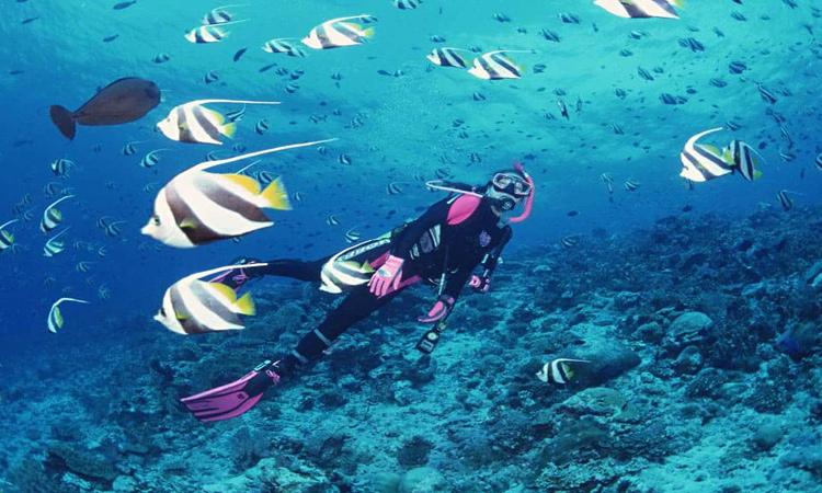 Biển đảo Phú Quốc - lặn
