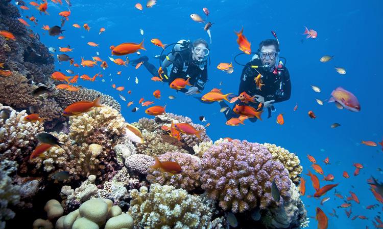 Biển đảo Phú Quốc - san hô