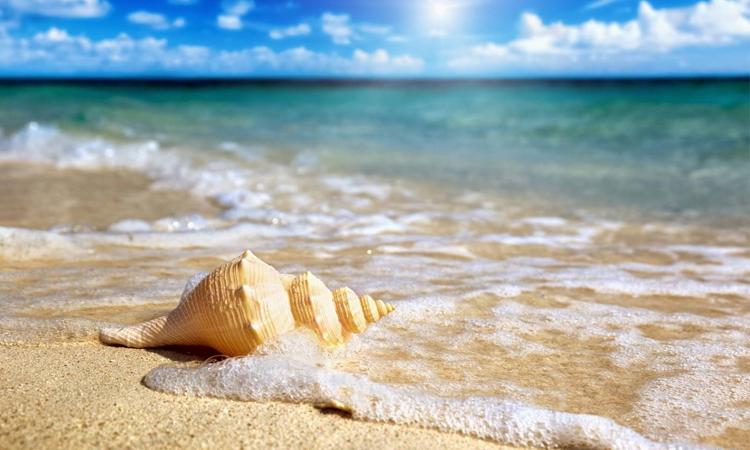 Biển đảo Phú Quốc - sò