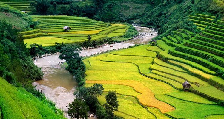 Cảnh đẹp Việt Nam - ruộng bậc thang