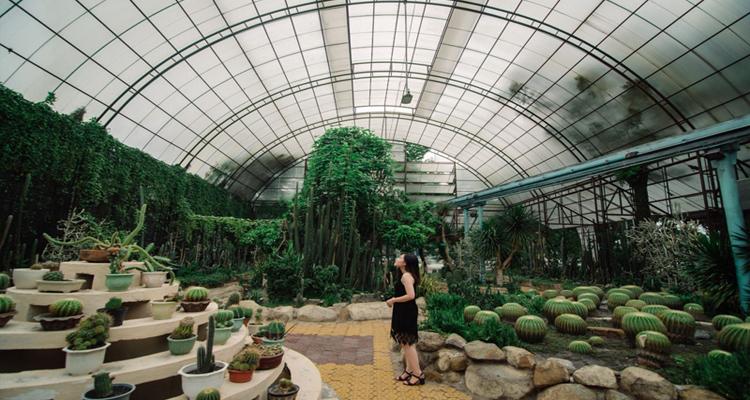 Công viên văn hóa Đầm Sen - xương rồng