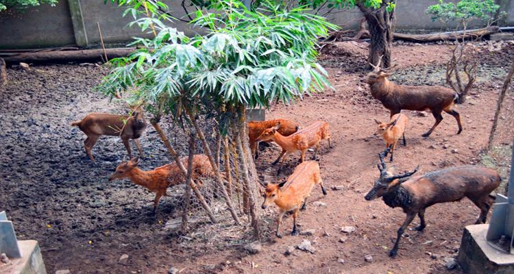 Công viên văn hóa Đầm Sen - hươu