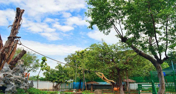 Công viên văn hóa Đầm Sen - vượn