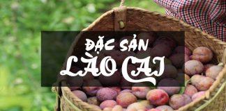 Đặc sản Lào Cai - mận