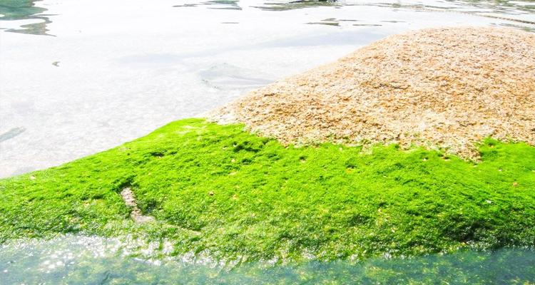 Đặc sản Phú Thọ - rêu đá
