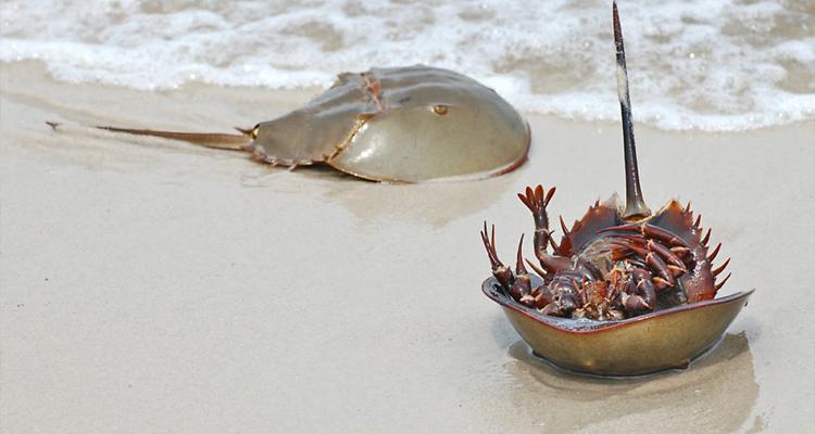 Đặc sản Quảng Ninh - sam biển