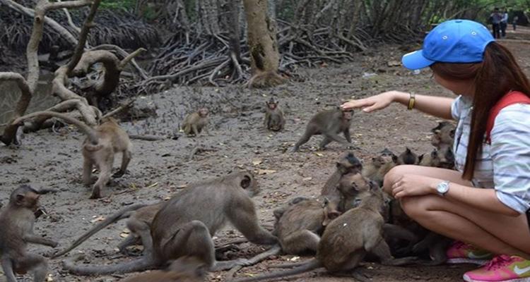 Du lịch Cần Giờ - đảo khỉ
