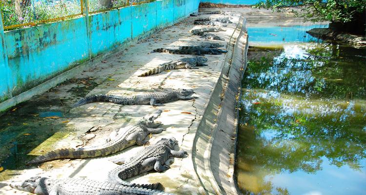 Khu du lịch Vinh Sang - cá sấu