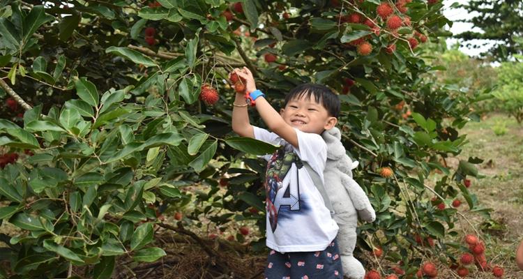 Khu du lịch Vinh Sang - chôm chôm
