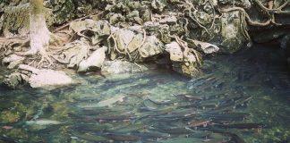 Suối cá Thần Thanh Hóa