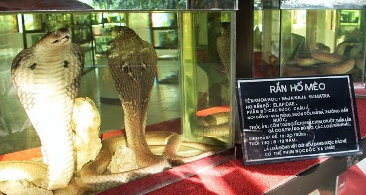 Trại rắn Đồng Tâm 05