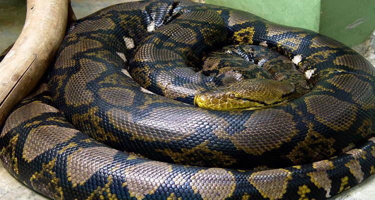 Trại rắn Đồng Tâm 07