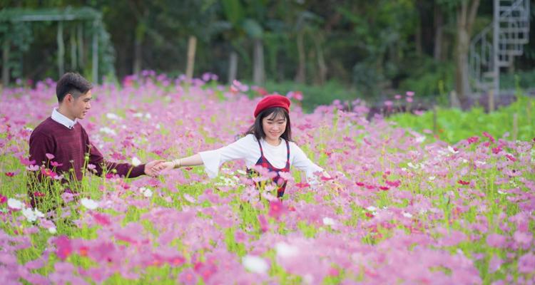 Vườn hoa Mãn Đình Hồng 01
