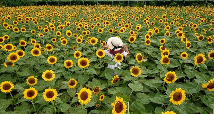 Vườn hoa Mãn Đình Hồng 04