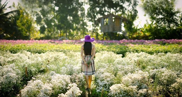 Vườn hoa Mãn Đình Hồng 05