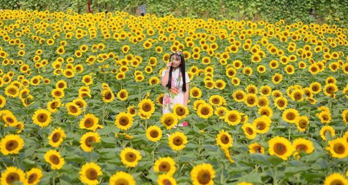 Vườn hoa Mãn Đình Hồng